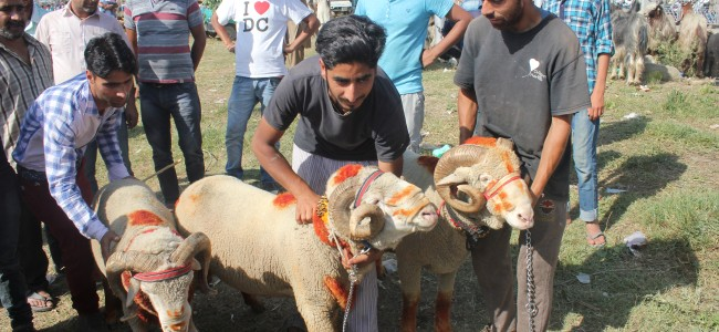 Sale of sacrificial animals picks up as Eid nears