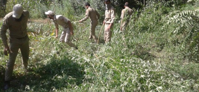 Drive against bung cultivation in Bandipora