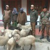 Another theft case in Ganderbal solved; 10 sheep, cash recovered