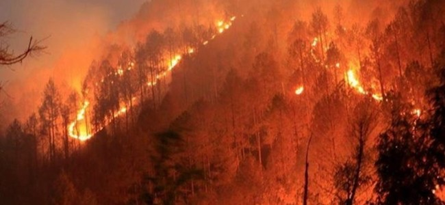 Fire erupts in Shikargah forests of Tral