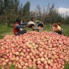 Growers demand setting up of fruit market in Tral