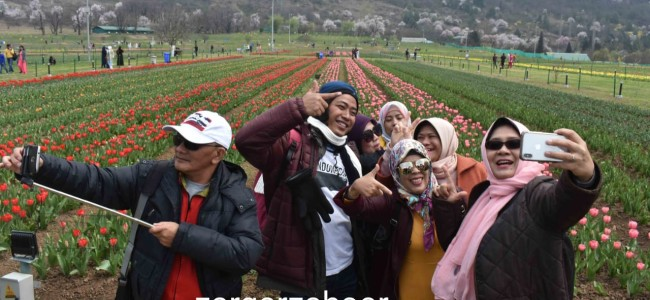 In Pictures: Tulip garden thrown open, witnesses impressive footfall of tourists on first day
