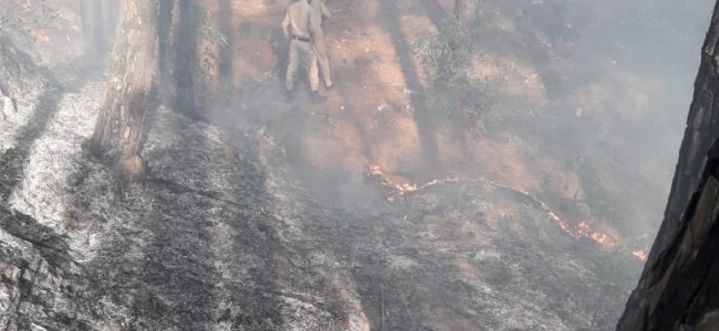 Fire in Manthal forests doused