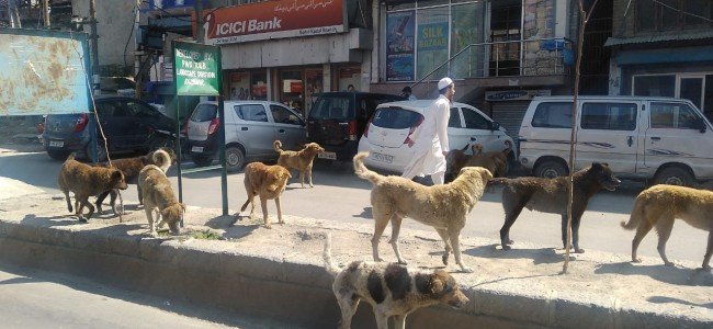Govt to start mass sterilization of dogs in Srinagar: Samoon