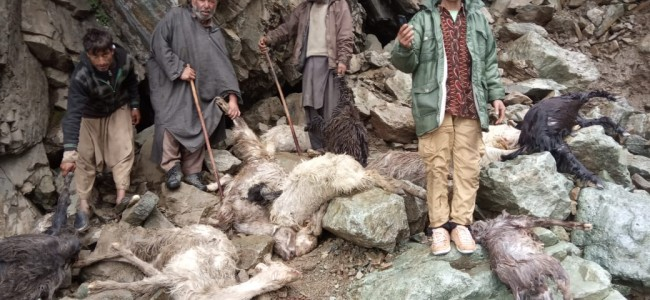 Around 100 sheep, goats killed in cloudburst in Tral pastures, many missing