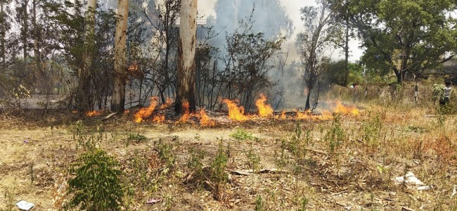 Forest fire erupts in Sidhra woods, houses suffer minor damages