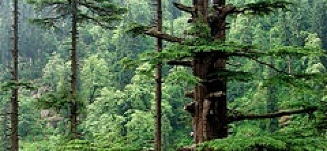 50 lakh trees to be planted by June next year; Guv says it will preserve, further enhance rich forest wealth of J&K