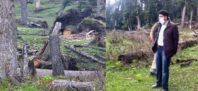 KCC&I urges action against 'mute' officials, seeks high level task to end timber smuggling